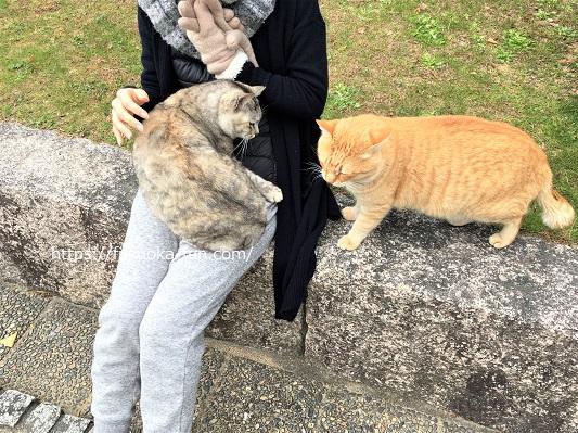 福岡 公園 猫が多い