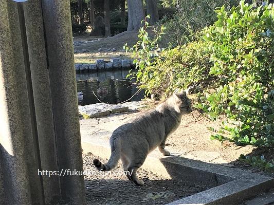 福岡 公園 猫