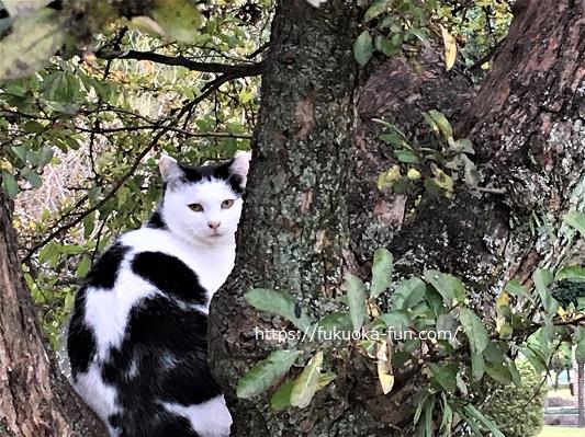 猫 福岡 公園