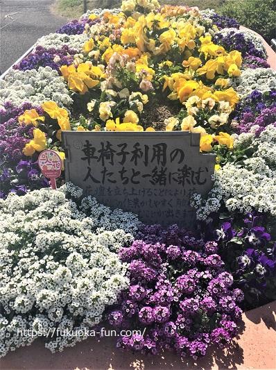 写真撮影できる公園 福岡