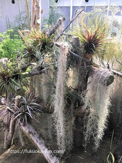 植物が多いスポット 福岡