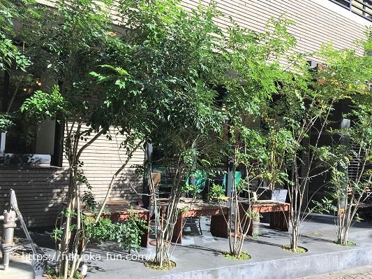 緑の見えるコーヒーショップ 福岡