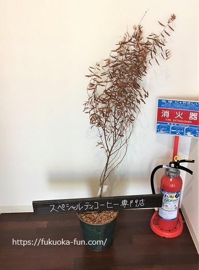 福岡 老舗コーヒー屋