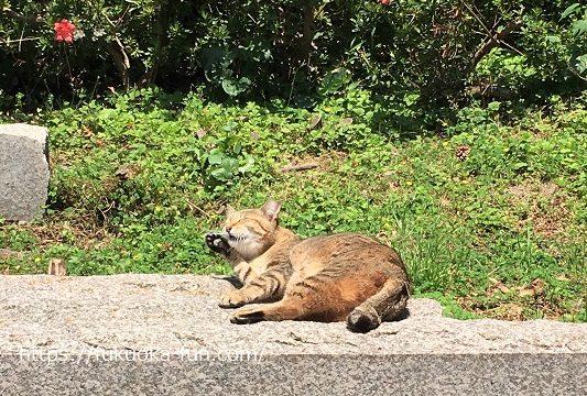 猫に会いたい 福岡