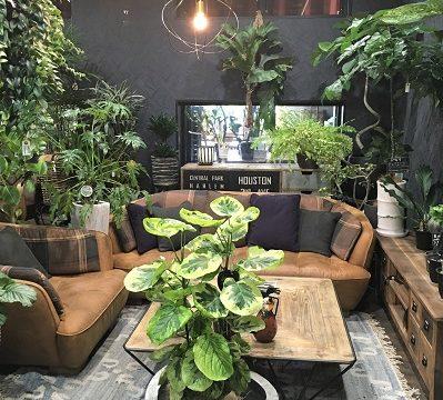 福岡 観葉植物 安い