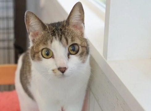 保護猫カフェ 福岡 人気